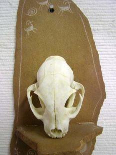Animal Skull - Bobcat