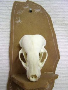 Animal Skull - Badger