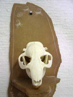 Animal Skull - Beaver