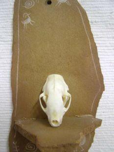 Animal Skull - Skunk